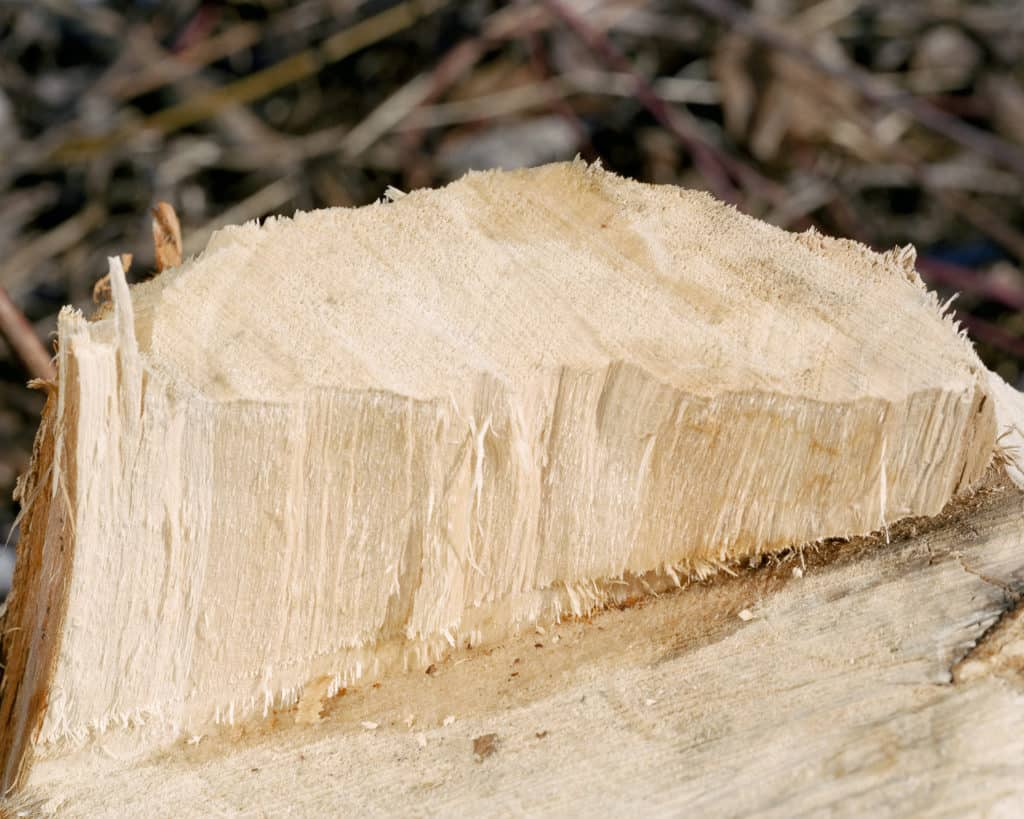 Darek Fortas, Still Life I (Wooden Log), from the series 'At Source' (2013), Courtesy the artist.