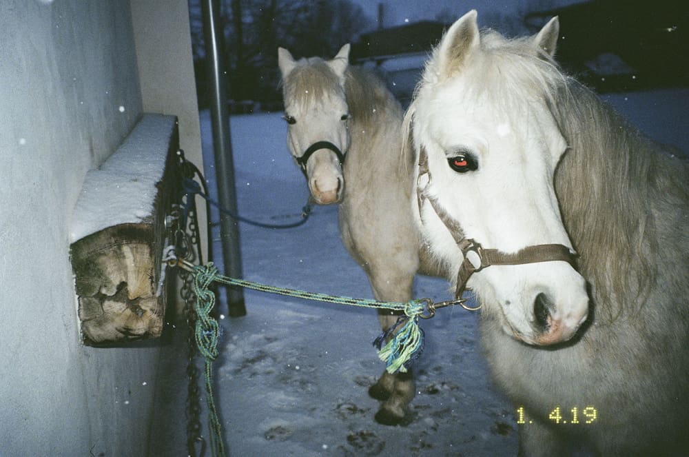 I have never been obsessed with horses until much later in my life, after my dad died and my mom met a new boyfriend from Austria. It took me a long time to accept him. Yet, in a strange way I became immediately fascinated with his horses